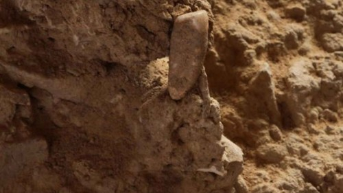 Imagem da notícia: Dente pode ajudar a desvendar mistério histórico