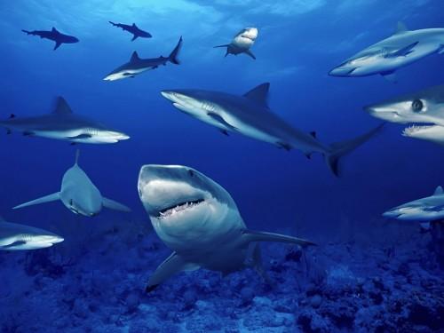 Imagem da notícia: Células de tubarões podem ser usadas em dentes humanos