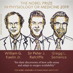 Imagem da notícia: Nobel da Medicina: como as células se adaptam a diferenças de oxigénio