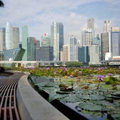 Imagem da notícia: Covid-19: IDEM Singapore 2020 será uma experiência digital